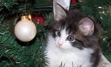 Animais-de-Estimação-VS-Decorações-de-Natal-Blog-Animal (5)