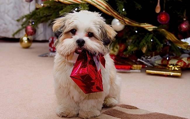 Animais-de-Estimação-VS-Decorações-de-Natal-Blog-Animal (6)