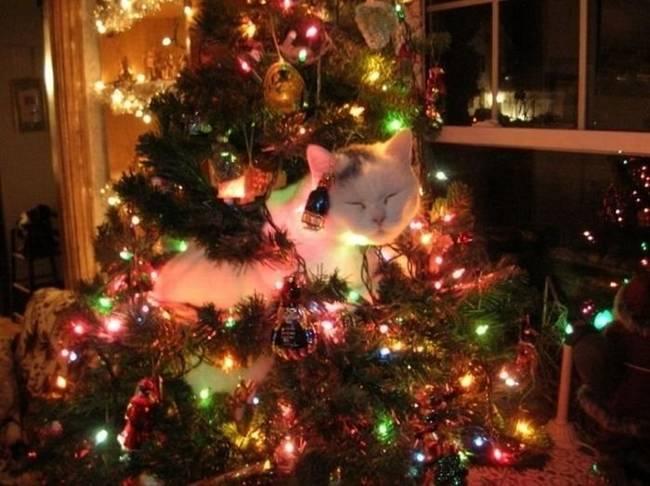 Animais-de-Estimação-VS-Decorações-de-Natal-Blog-Animal (7)