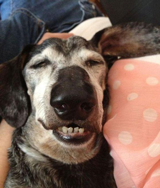 Cães de ressaca (14)