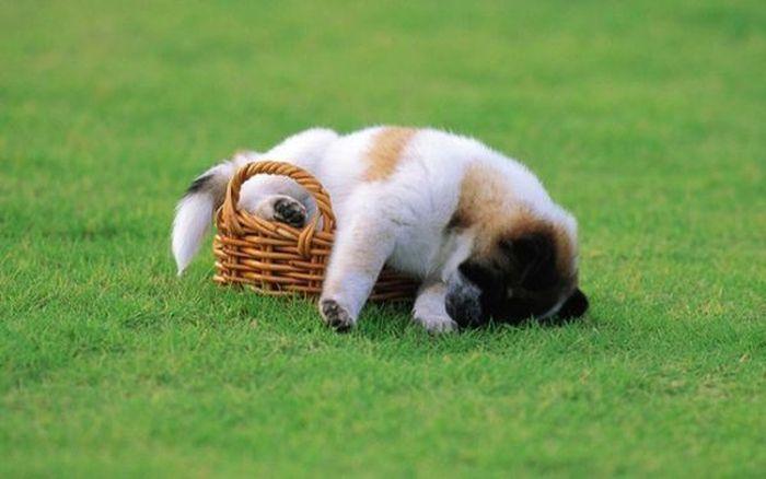 Cães de ressaca (9)