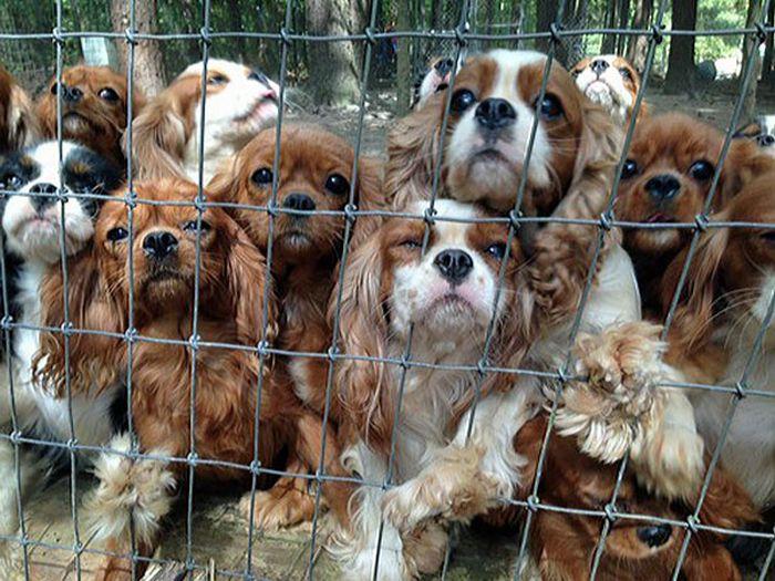 Cães resgatados de fazenda