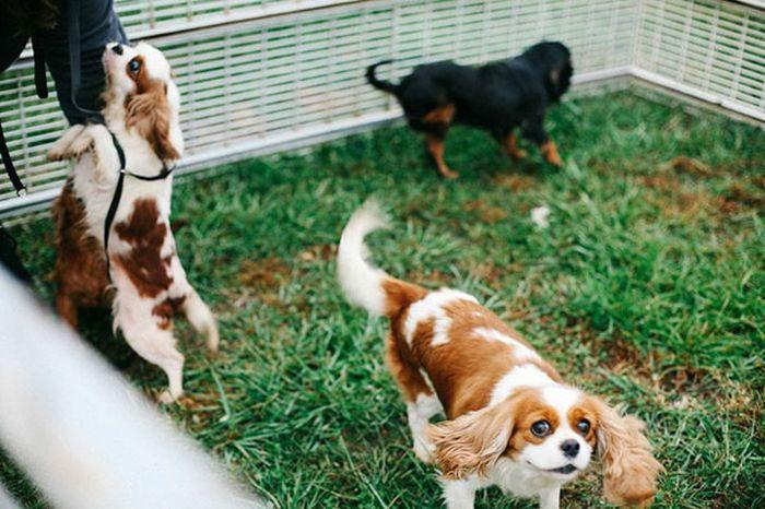 Cães resgatados de fazenda (10)