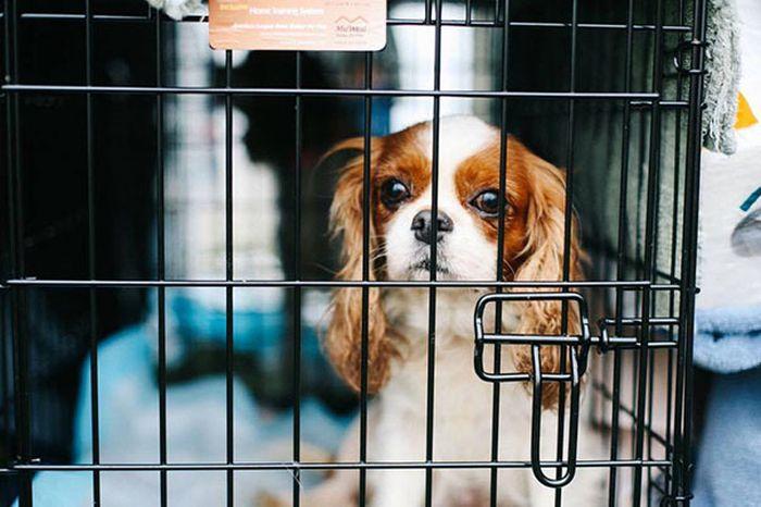 Cães resgatados de fazenda (11)