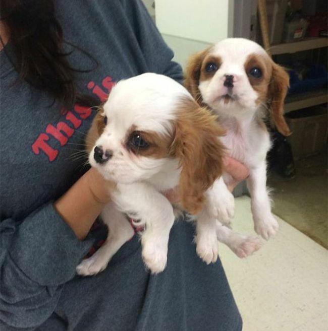 Cães resgatados de fazenda (14)