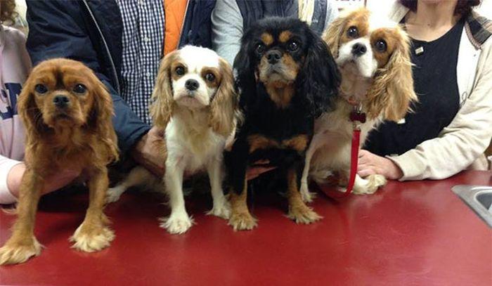 Cães resgatados de fazenda (15)