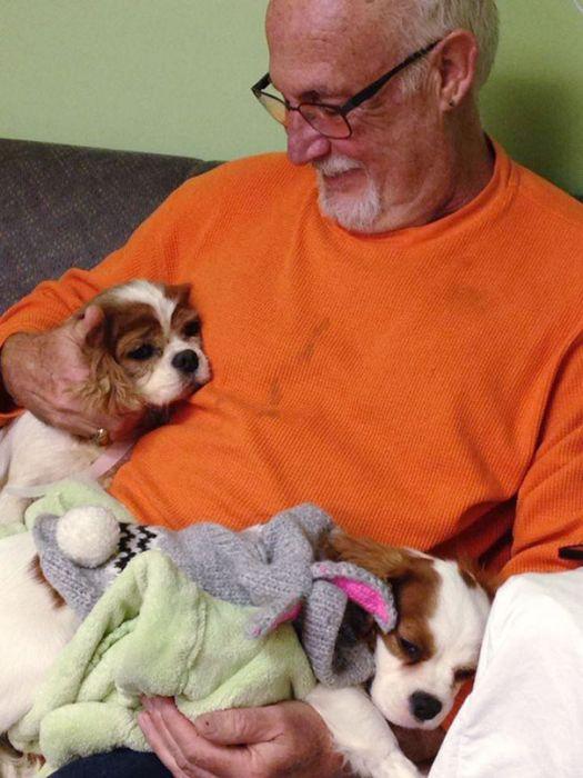Cães resgatados de fazenda (18)