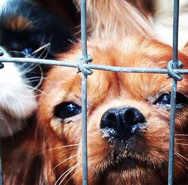 Cães resgatados de fazenda (2)