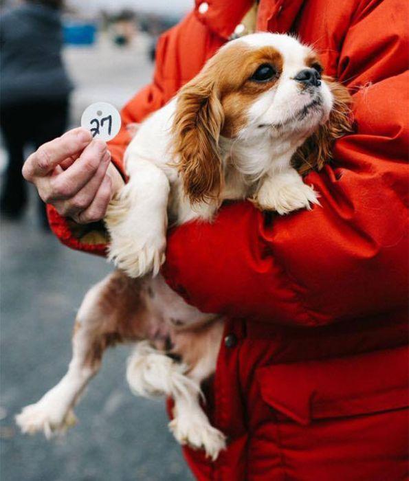 Cães resgatados de fazenda (21)