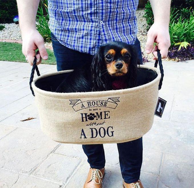 Cães resgatados de fazenda (22)