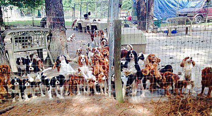 Cães resgatados de fazenda (3)