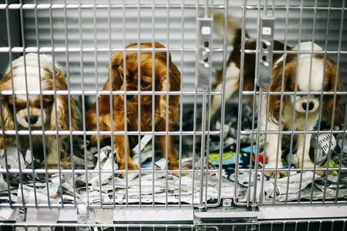 Cães resgatados de fazenda (4)