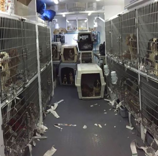Cães resgatados de fazenda (6)