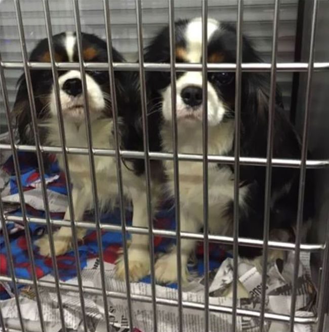 Cães resgatados de fazenda (7)