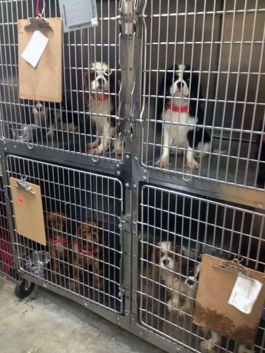 Cães resgatados de fazenda (8)
