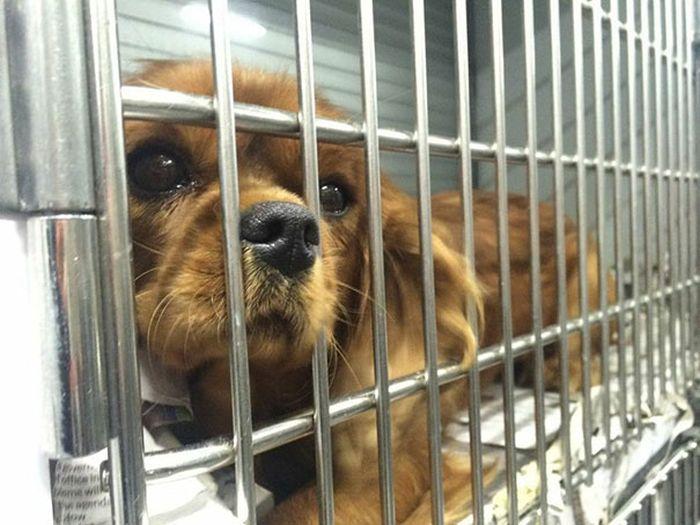 Cães resgatados de fazenda (9)
