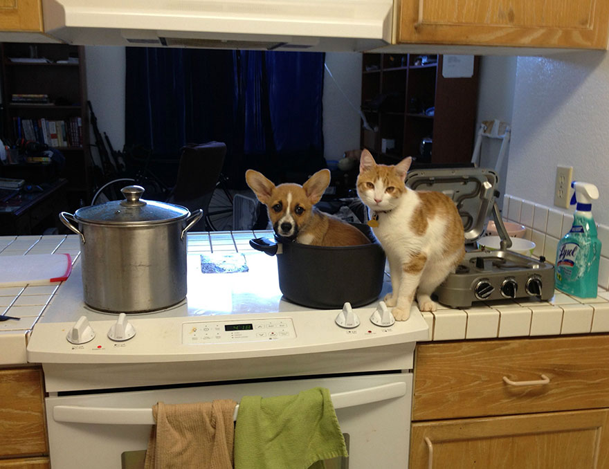 Cão e gato são amigos inseparáveis (2)
