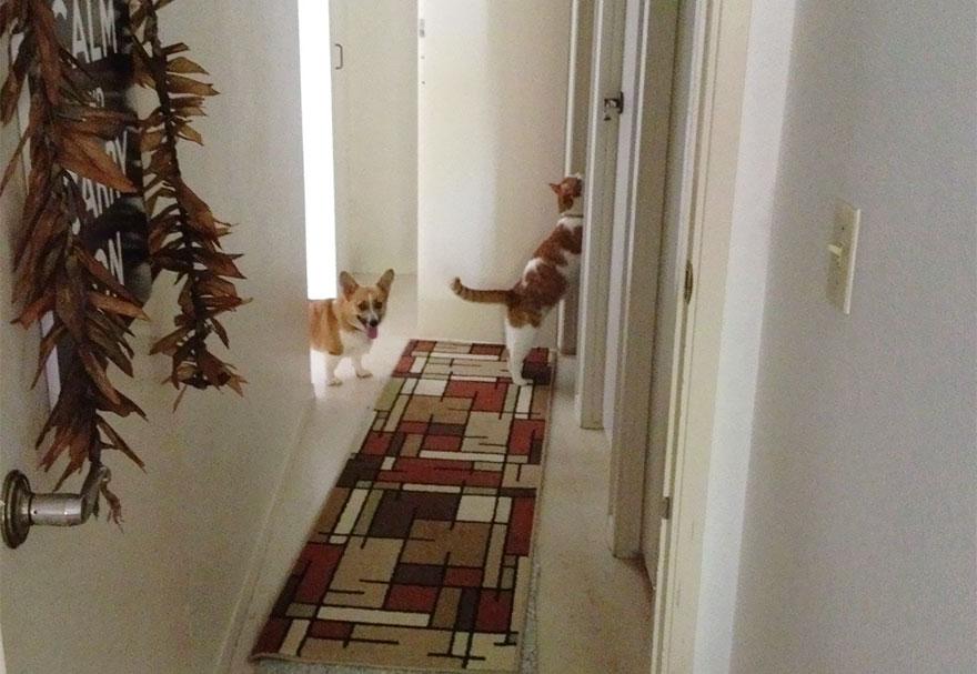 Cão e gato são amigos inseparáveis (7)