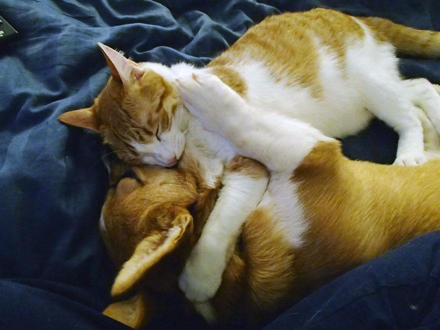 Cão e gato são amigos inseparáveis (9)