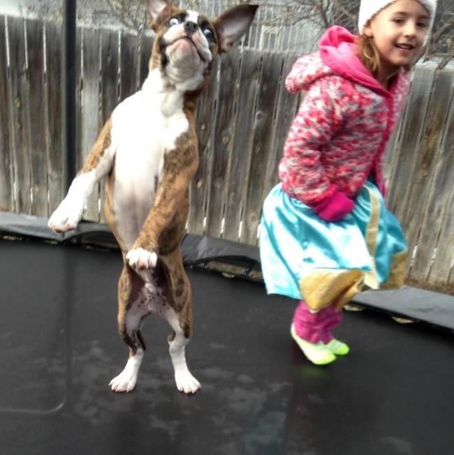 Crianças-que-aprenderam-cedo-que-os-cães-são-nossos-melhores-amigos-Blog-Animal (1)