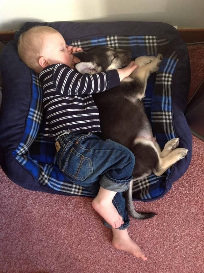 Crianças-que-aprenderam-cedo-que-os-cães-são-nossos-melhores-amigos-Blog-Animal (3)