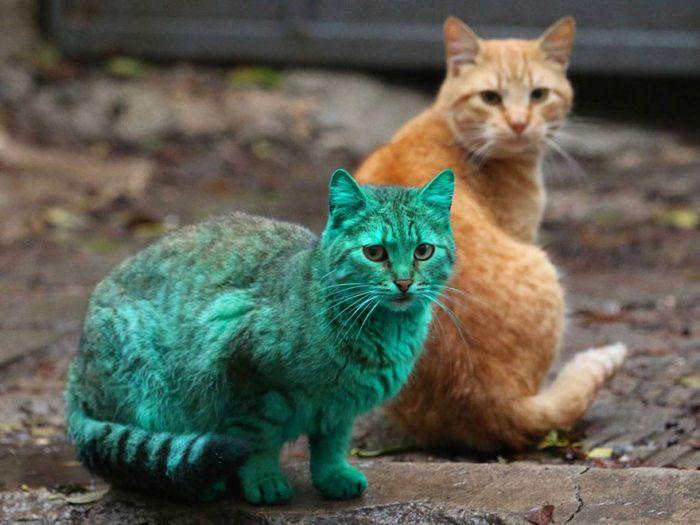 Gato verde vagando pelas ruas da Bulgária (2)