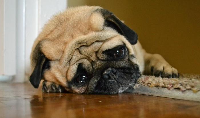 GoPro instalada em cachorro capta reação comovente