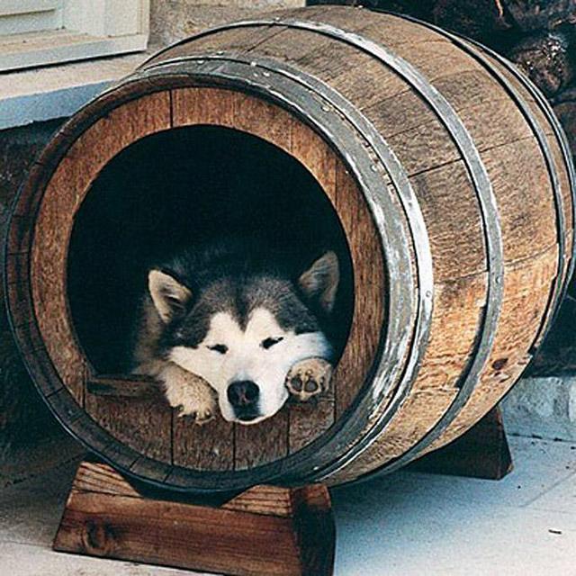 Ideias-criativas-para-fazer-casinhas-e-caminhas-para-cães-e-gatos-Blog-Animal (10)