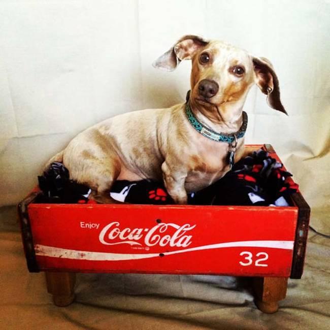 Ideias-criativas-para-fazer-casinhas-e-caminhas-para-cães-e-gatos-Blog-Animal (13)