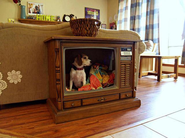 Ideias-criativas-para-fazer-casinhas-e-caminhas-para-cães-e-gatos-Blog-Animal (3)