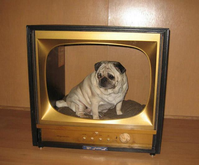 Ideias-criativas-para-fazer-casinhas-e-caminhas-para-cães-e-gatos-Blog-Animal (4)