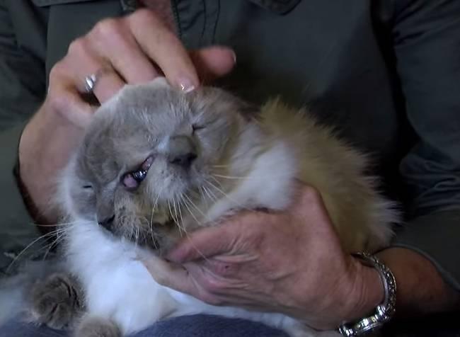 Morre-o-gato-de-duas-cabeças-mais-velho-do-mundo-Blog-Animal (2)