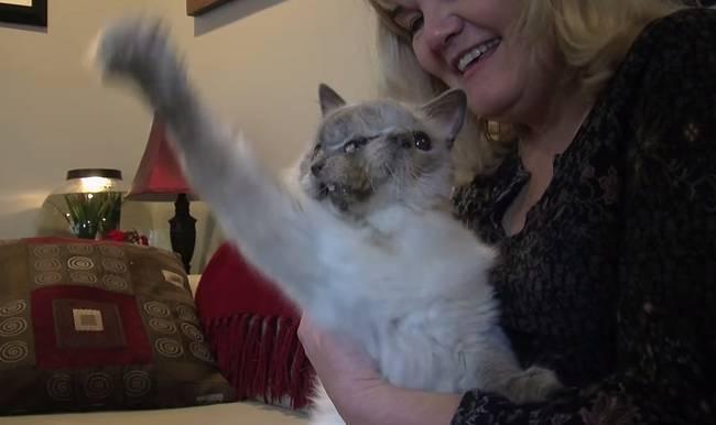 Morre-o-gato-de-duas-cabeças-mais-velho-do-mundo-Blog-Animal (7)