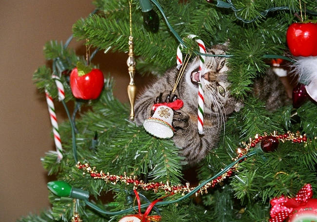 Natal-é-a-época-do-ano-preferida-dos-gatos-curiosos-Blog-Animal (1)