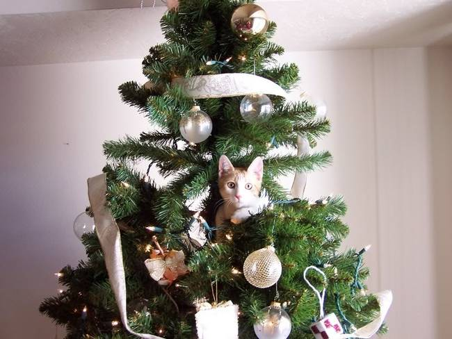 Natal-é-a-época-do-ano-preferida-dos-gatos-curiosos-Blog-Animal (6)