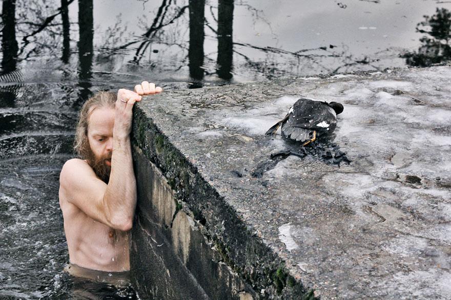 Norueguês mergulha em lago para salvar um pato em apuros (2)