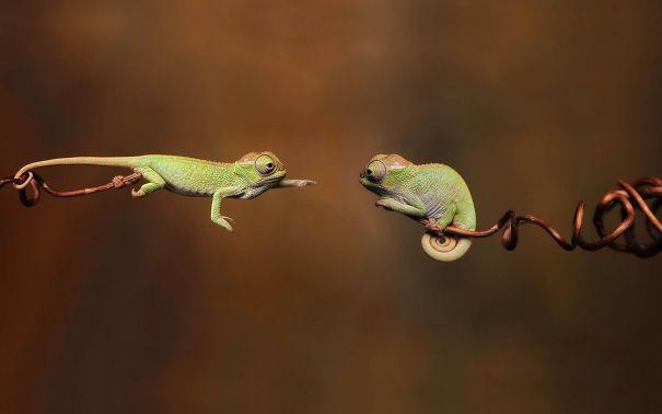 Répteis-também-podem-ser-fofos-Blog-Animal (1)
