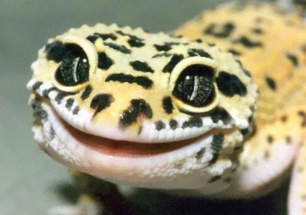 Répteis-também-podem-ser-fofos-Blog-Animal (5)