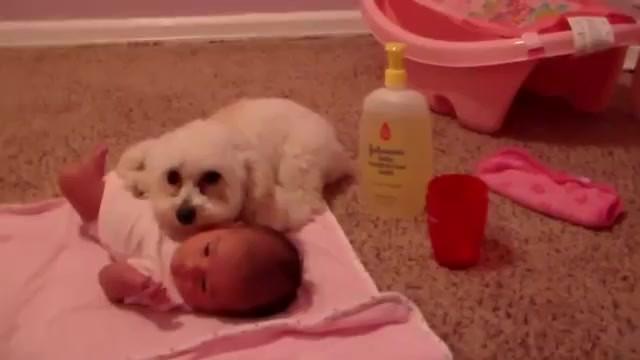 Vídeo fofo mostra cão protegendo bebê recém-nascido de um aspirador de pó