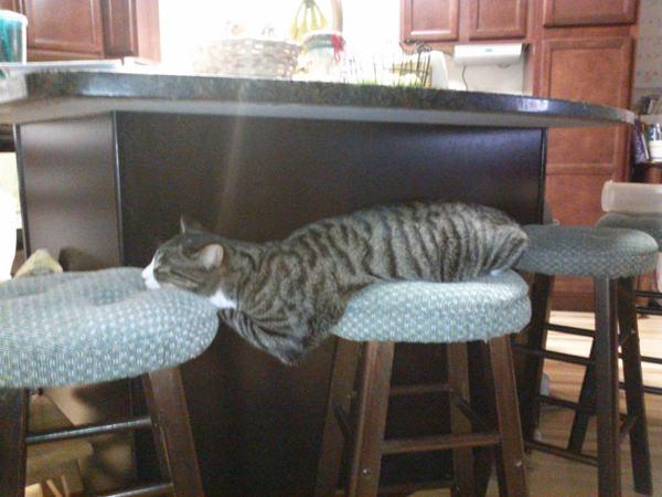 25-Animais-com-sono-que-realmente-estavam-precisando-dormir-urgentemente (2)