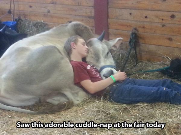 25-Animais-com-sono-que-realmente-estavam-precisando-dormir-urgentemente (9)