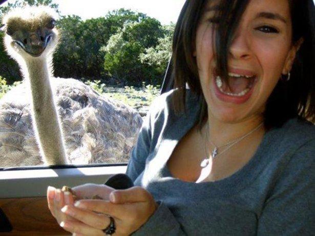 A-vingança-dos-animais-de-Zoológicos-e-Safaris-contra-os-humanos (1)