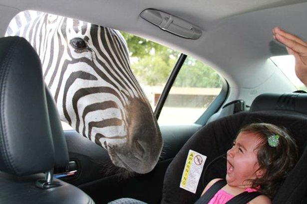 A-vingança-dos-animais-de-Zoológicos-e-Safaris-contra-os-humanos (10)