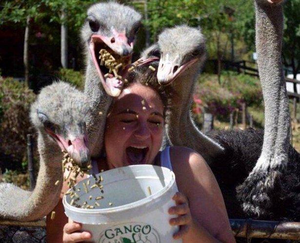 A-vingança-dos-animais-de-Zoológicos-e-Safaris-contra-os-humanos (12)