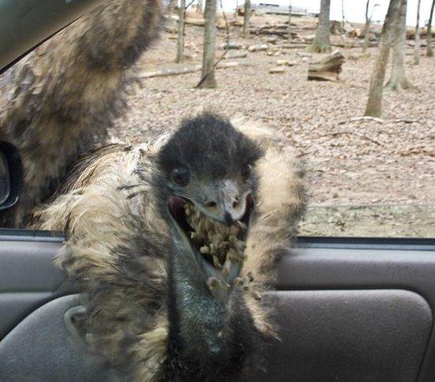 A-vingança-dos-animais-de-Zoológicos-e-Safaris-contra-os-humanos (16)