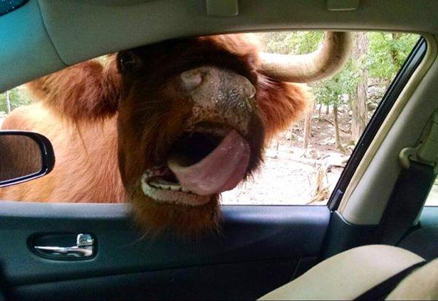 A-vingança-dos-animais-de-Zoológicos-e-Safaris-contra-os-humanos (2)