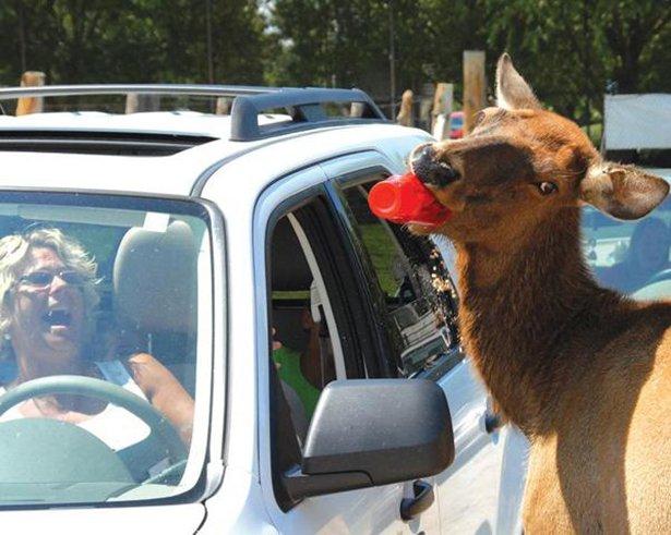 A-vingança-dos-animais-de-Zoológicos-e-Safaris-contra-os-humanos (5)