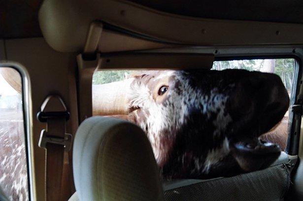 A-vingança-dos-animais-de-Zoológicos-e-Safaris-contra-os-humanos (6)