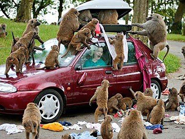 A-vingança-dos-animais-de-Zoológicos-e-Safaris-contra-os-humanos (8)