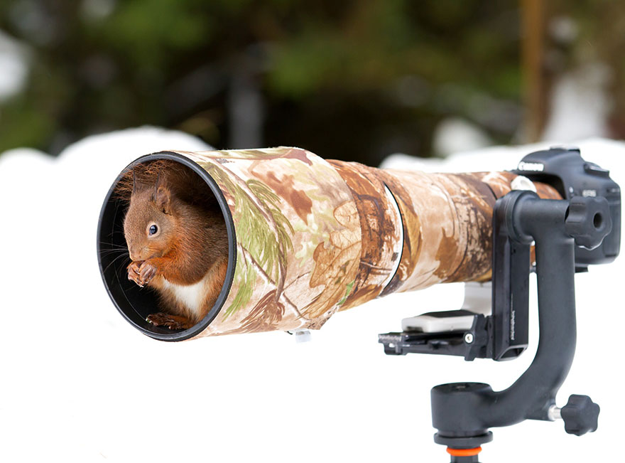 Animais ficando confortáveis com equipamento fotográfico (10)